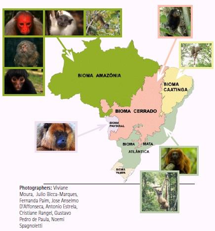 Exemplos da Biodiversidade de Primatas através dos biomas brasileiros